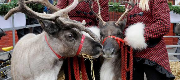 Kerry & Nicki Reindeer2Hire Home Visit
