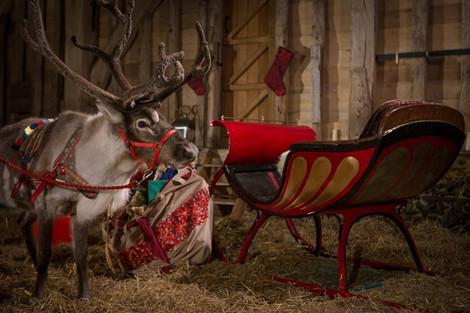Reindeer2Hire reindeer with Santas sleig