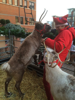 Happy Nosey Reindeer Playing.jpg