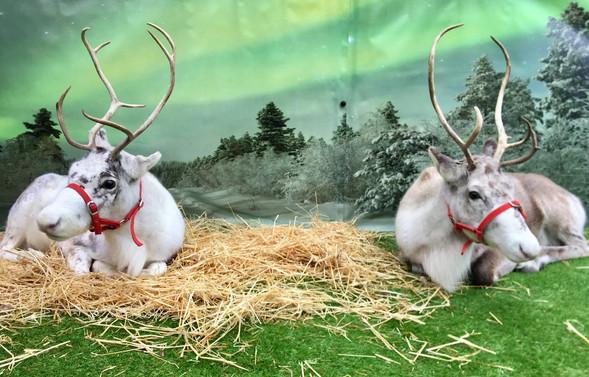 Reindeer2Hire Snowflake and sister