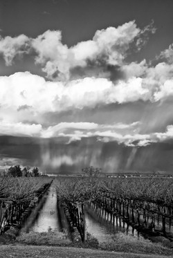 _LYP8586 F BW Storm in the Vineyard