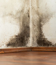 OC Home Services Mold Remediation