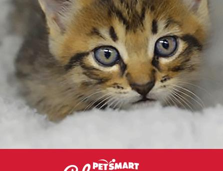 PetSmart National Adoption Week!