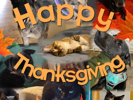 We're Thankful for You!