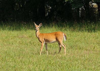 brown-deer-756758_2048x.jpg