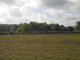 Im Amish-land