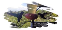 Les colibris