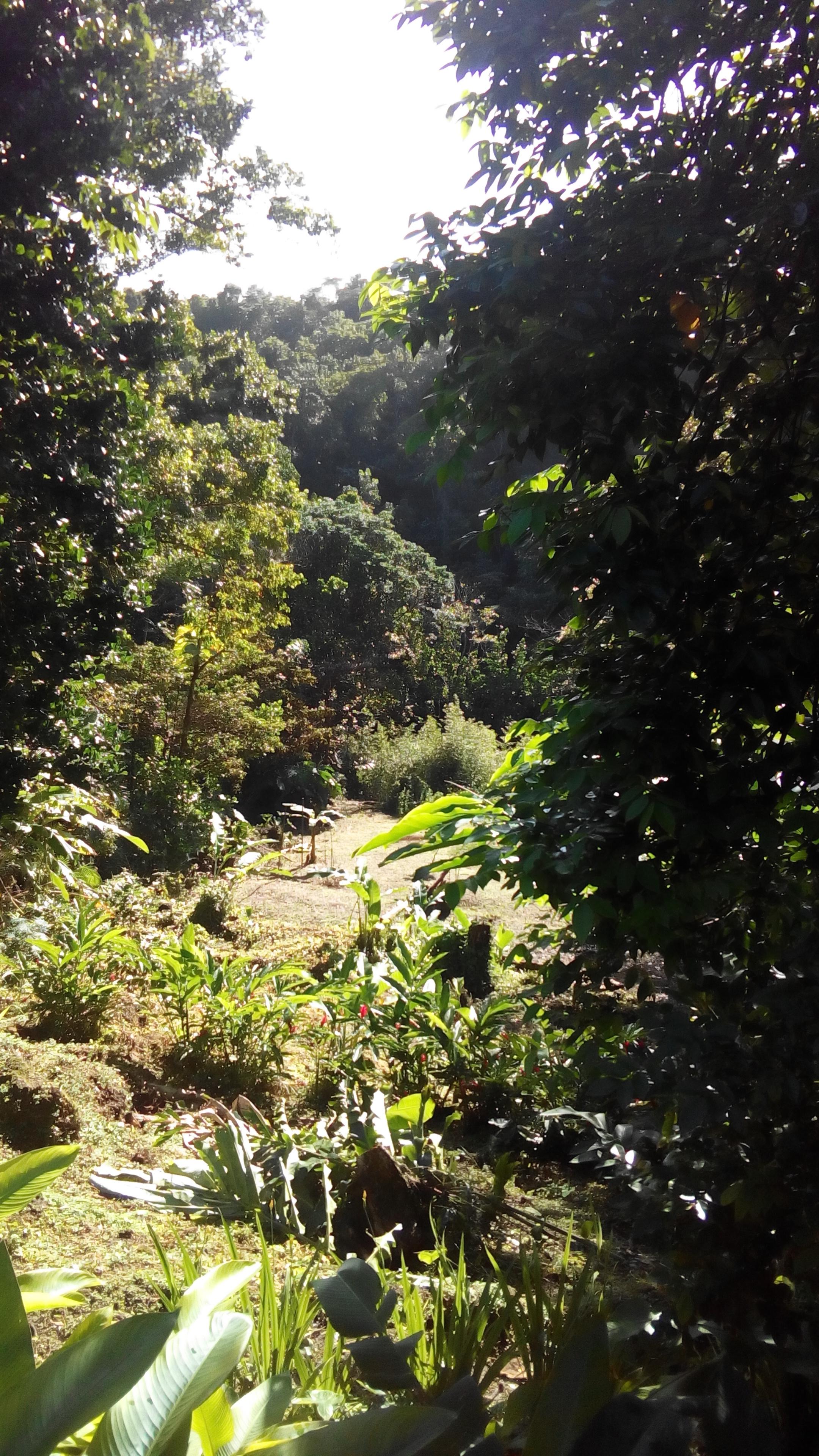 Le parc tropical