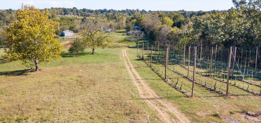 West Sixth Farm Hops
