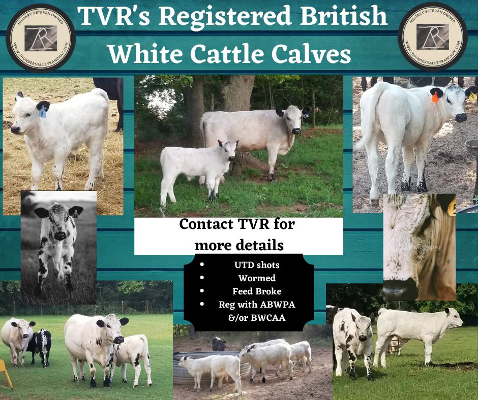 TVR BW Calves Sale .png