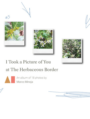 I Took a Picture of You at The Herbaceous Border