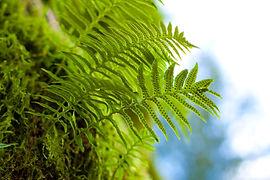 undershot of a green fern