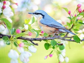 Enfim, a primavera!