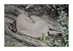 Artwork by Lambert Oostrum | Mira Chameleon