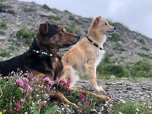 Dog Mala mit Zeckenschutz - Silikon