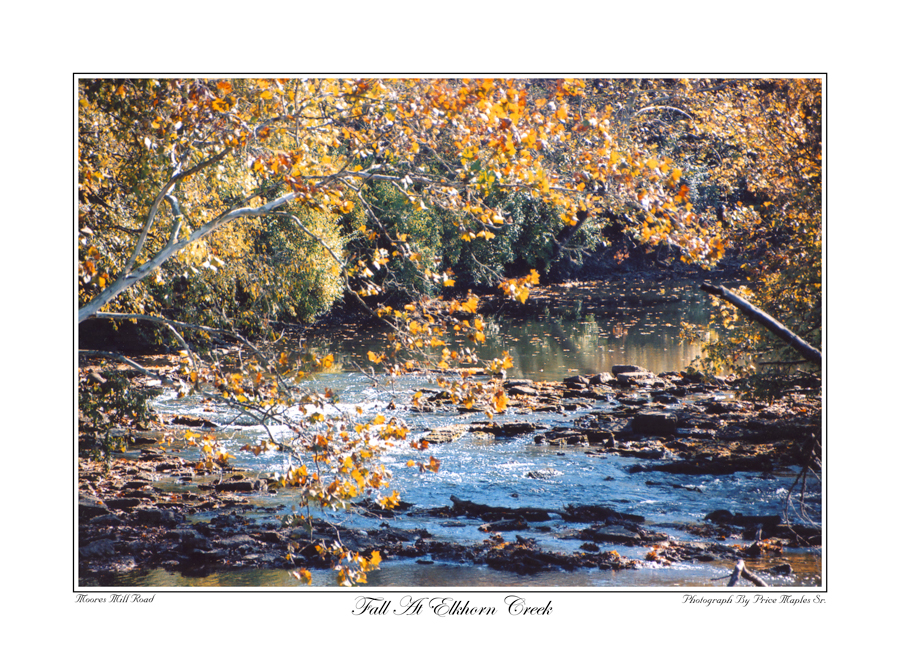 Fall At Elkhorn Creek