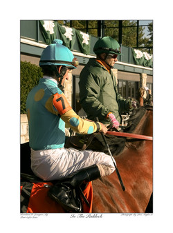 In The Paddock Teal And Yellow Silks