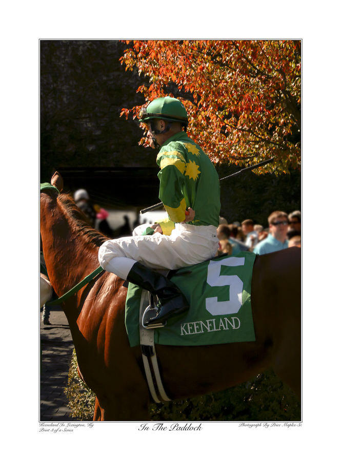 In The Paddock Green And Yellow Silks