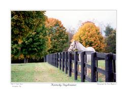 Kentucky Daydreamer
