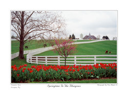 Spring Time Bluegrass