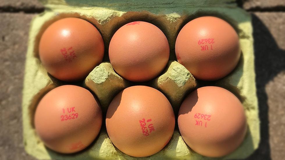 6 Medium Eggs