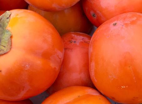Persimmon season is happening now