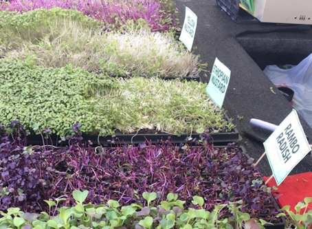Are microgreens more nutritious?