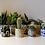 Thumbnail: Succulent Pots