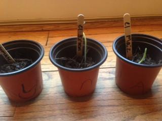 ¡Las semillas germinan!