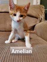 Amelian.JPG