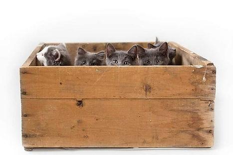 julies kittens.jpg