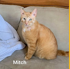 Mitch.jpg