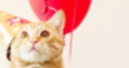Cat Birthday.png
