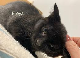 Freya.jpg