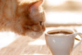Cat with coffee mug.jpg
