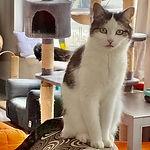 Gracie resident.jpg