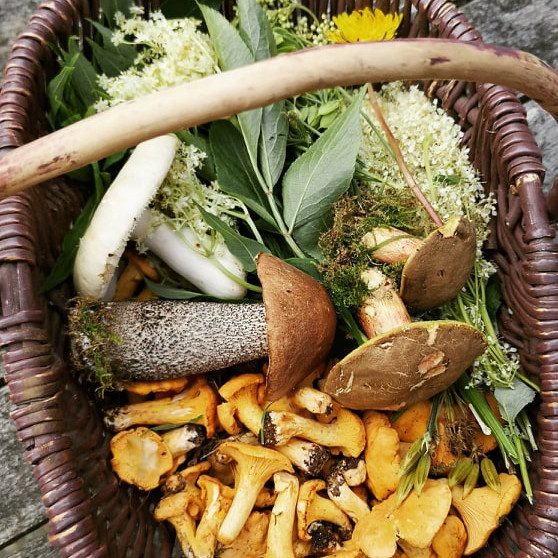Foraging Course Gift Voucher