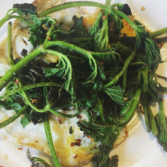 Fast and simple breakfast (perhaps not that pretty). Fried eggs topped with sautéed hogweed shoots and chilli salt. Boom.jpg