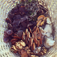 A wee basket of #foraged winter mushrooms.jpg Oysters are not having as good a year as last year, but velvet shanks are doing well as usual.jpg