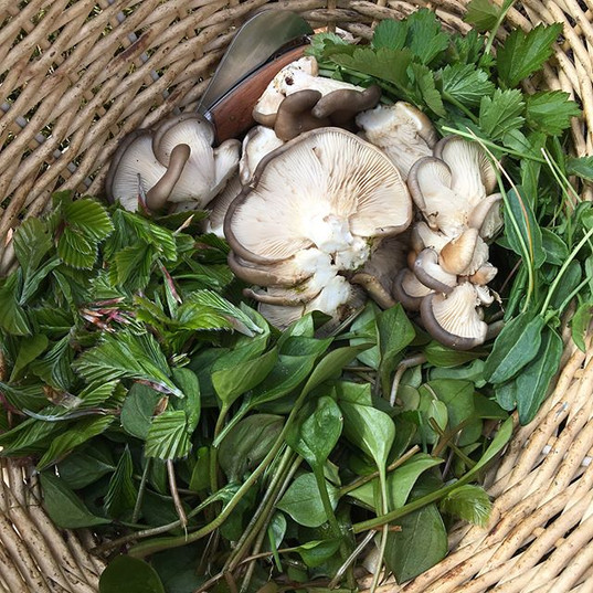 The foraged goodies for the meal 😍 #foraging #wildfood