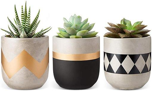 Small cactus pots