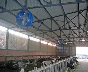 livestock-cooling-patterson-fans.jpg