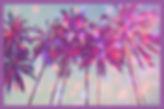 SSC_Summer2020 TREES.jpg