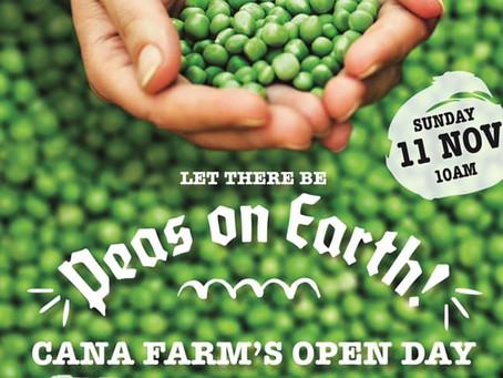 Penrith's Cana Farm Open Day on Sunday fresh produce, Christmas pressie ideas