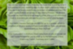 Lettuce_edited_edited.jpg