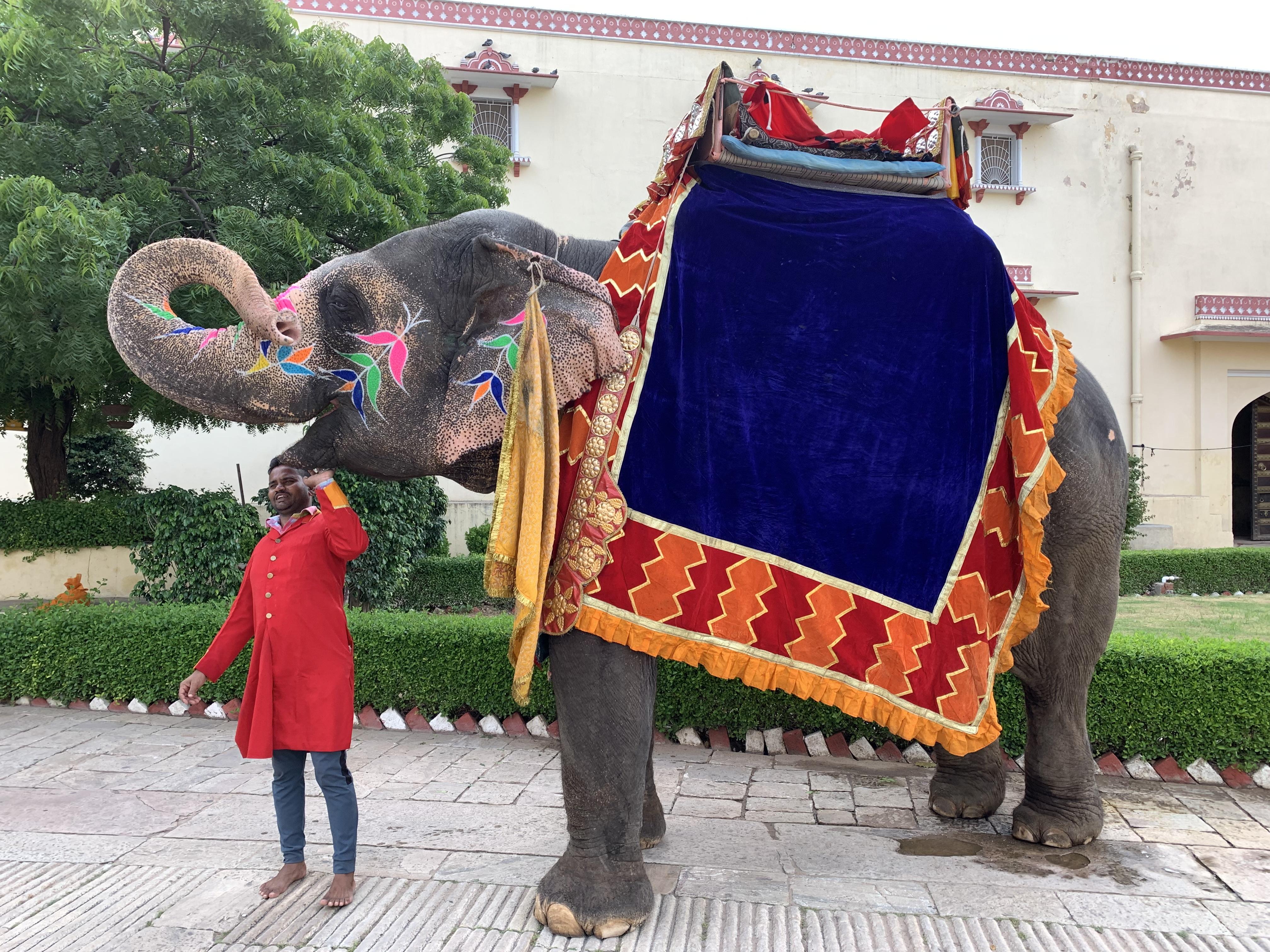 Decorated Elephant Jaipur