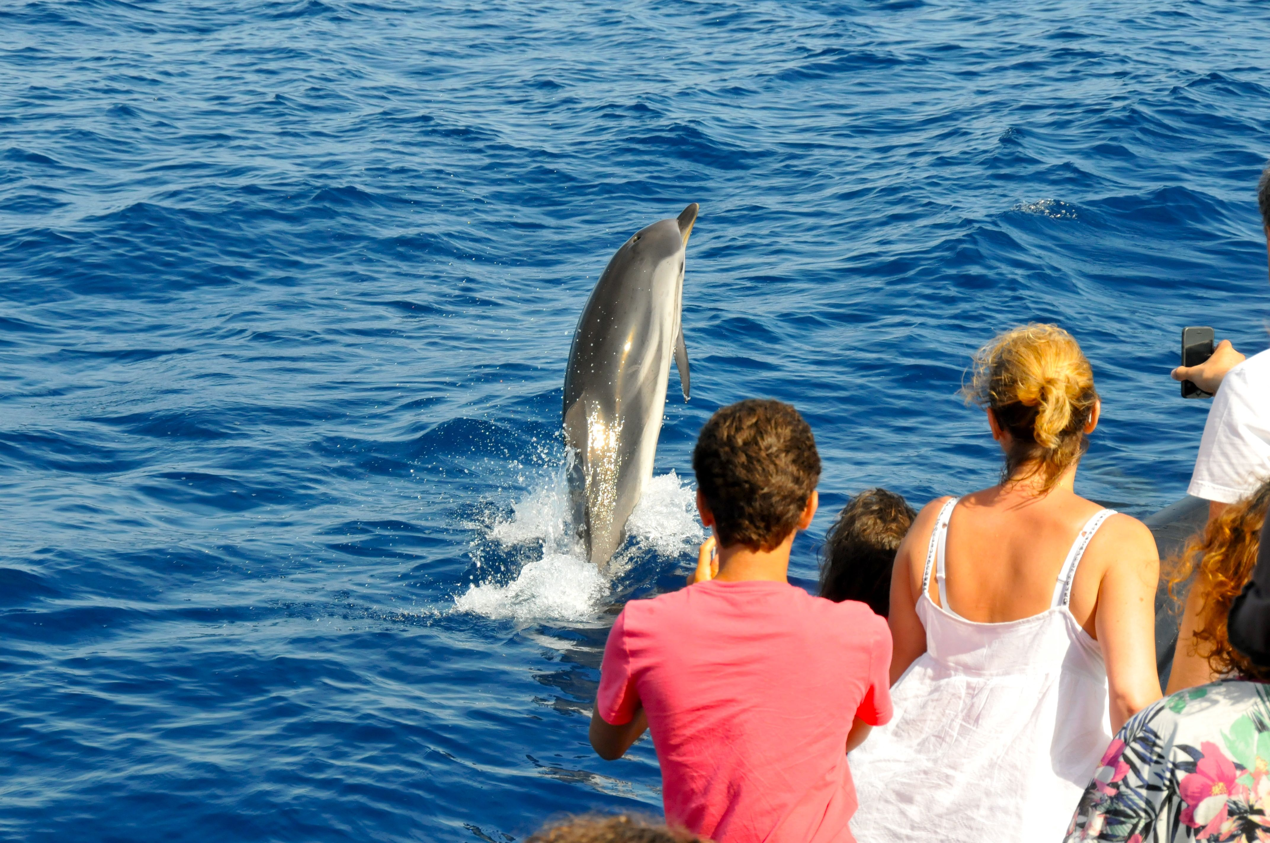 dauphin-méditerranée