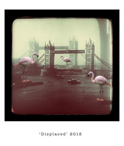 'Displaced' 2018