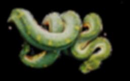 Hanging-Snake.png