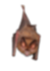 Hanging-Bat.png